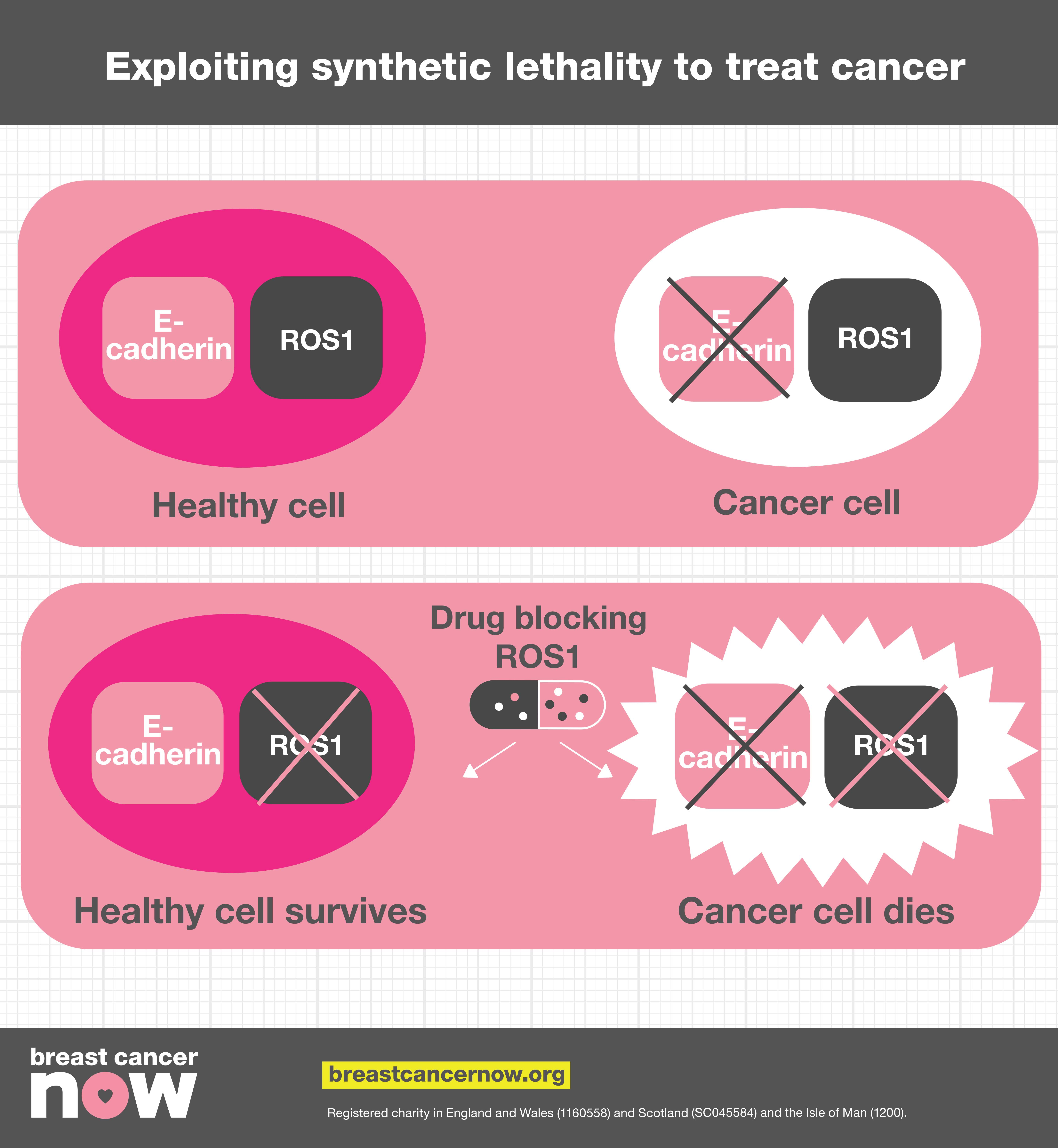 Infographic explaining exploiting synthetic lethality to treat cancer