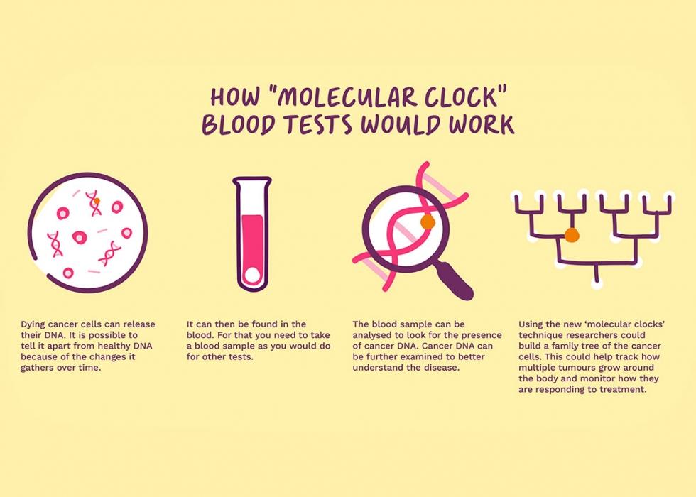 Molecular clock diagram