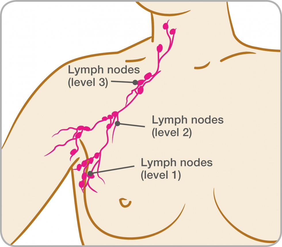 diagram of the lymph nodes