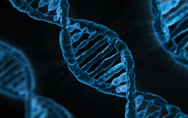 Breast cancer genetic risk