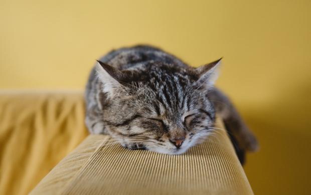 Expert tips for better sleep