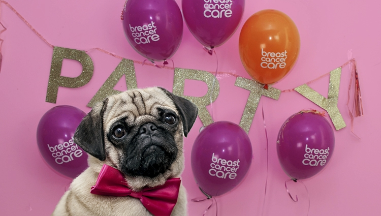 A pug in a pink bow tie, with a quizzical look on its face.