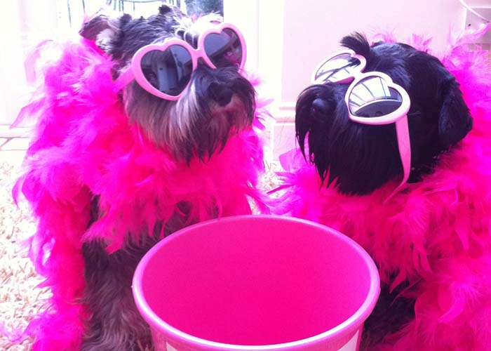 Two dogs by a collection bucket