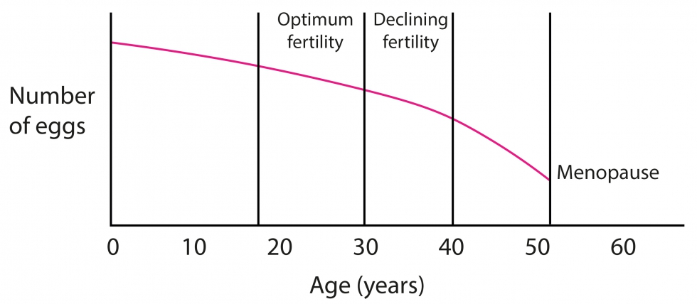 graph showing fertility decline