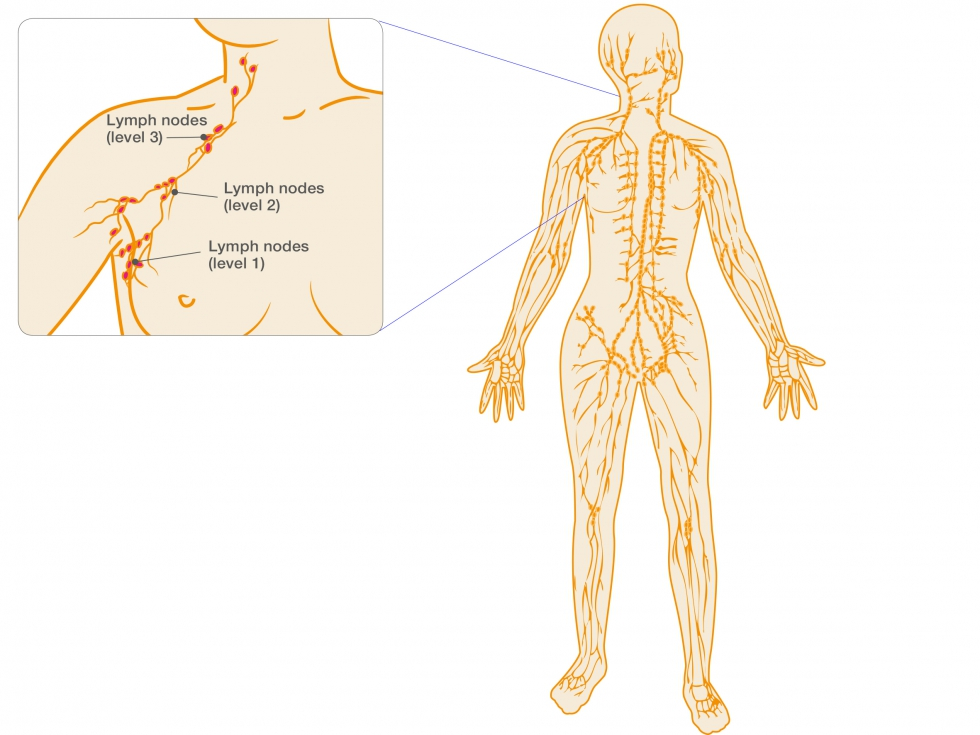 Understanding The Lymphatic System
