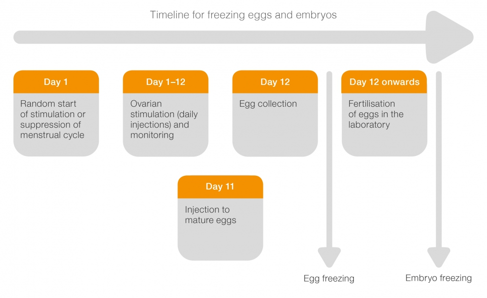timeline showing stages of egg freezing