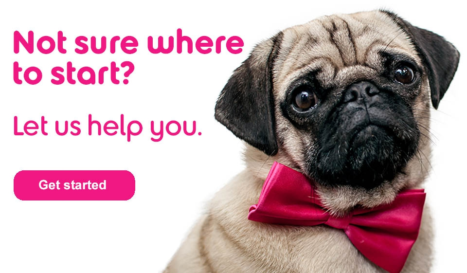 An image of a pug in a pink bow tie